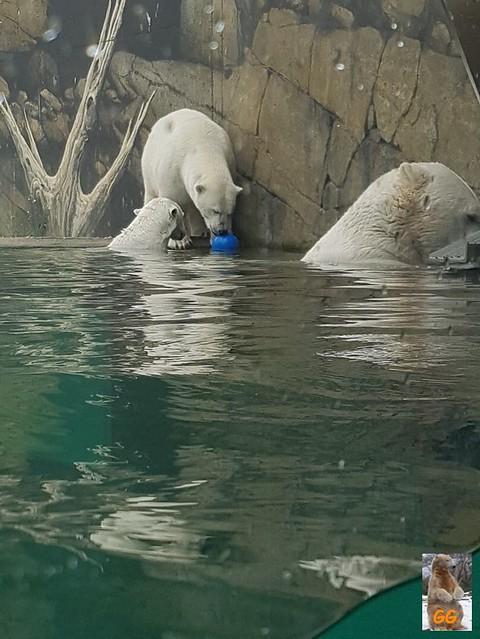 Besuch Zoo Rostock 20.06.21026