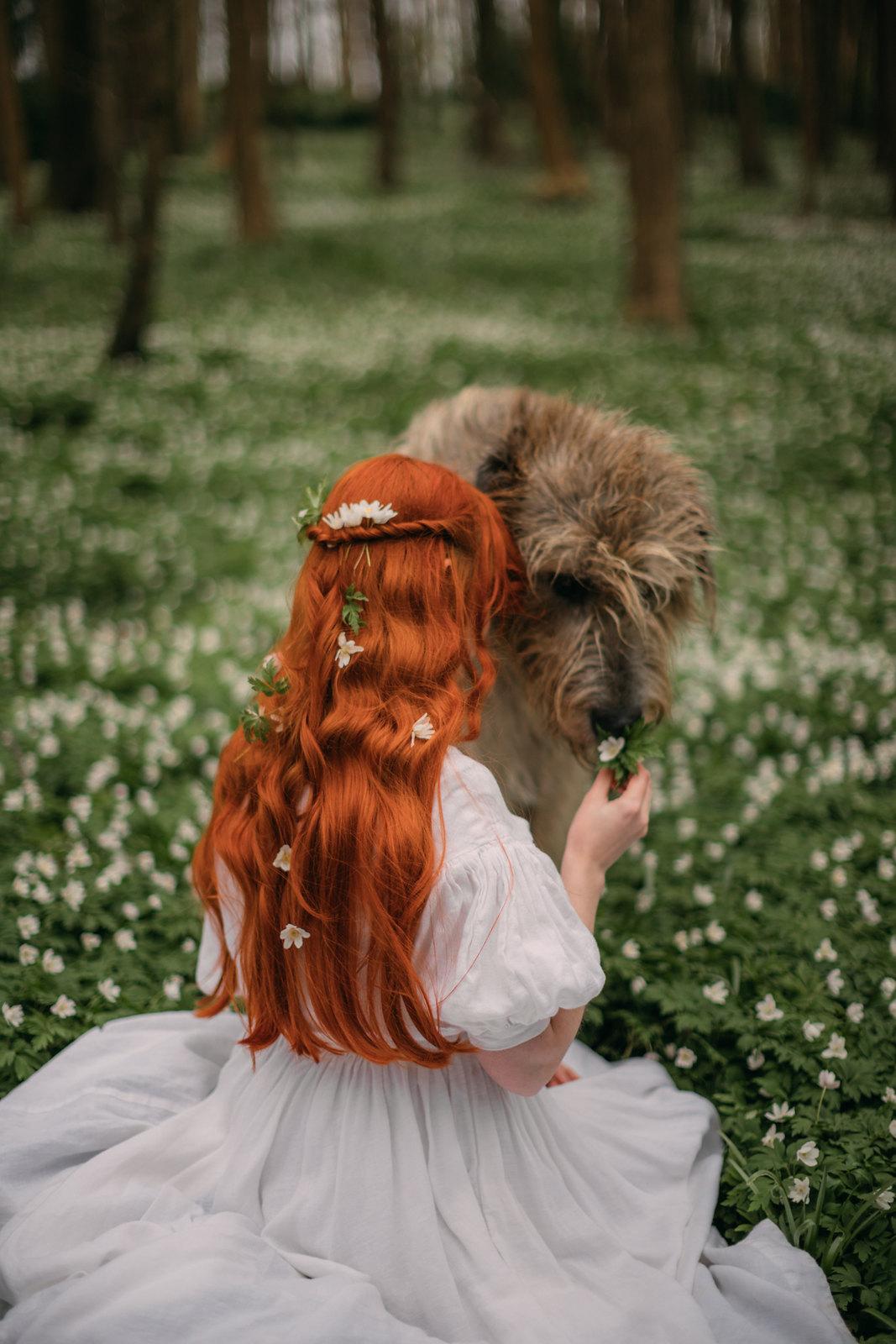 irish wolfhound, owning an irish wolfhound, cottagecore, cottagecore pets, cottagecore lifestyle, wolfhound