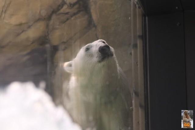 Besuch Zoo Rostock 21.06.21012