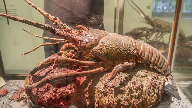 A lobster taxidermy at Mohamed Ali taxidermy museum