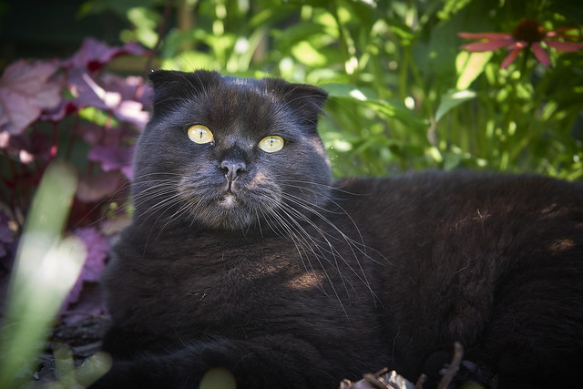 leon in the garden