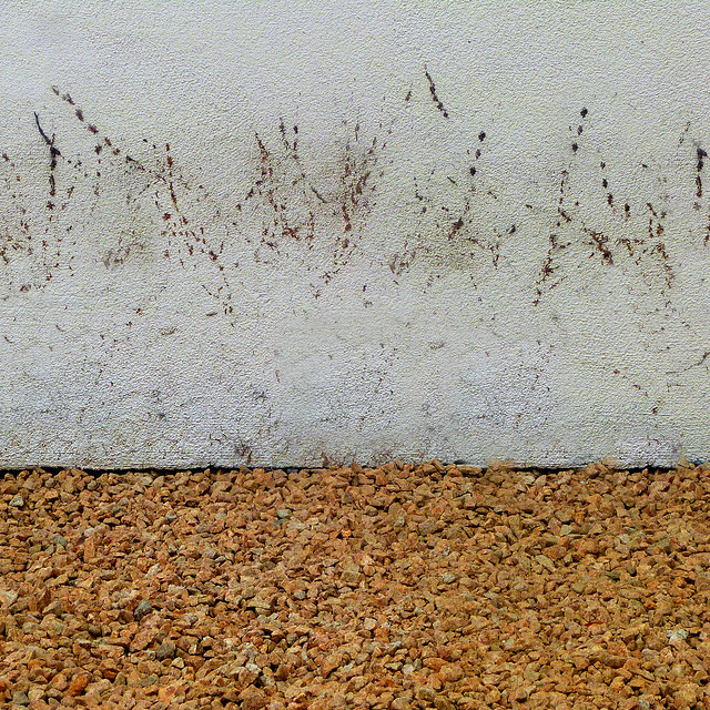 plant prints and pea gravel
