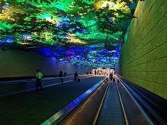 Underground forest