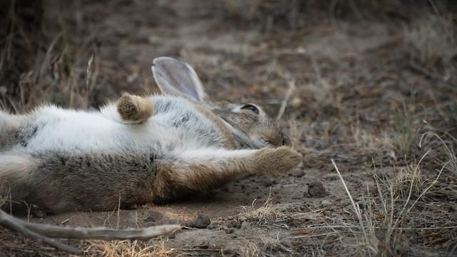 Silly Rabbit #2
