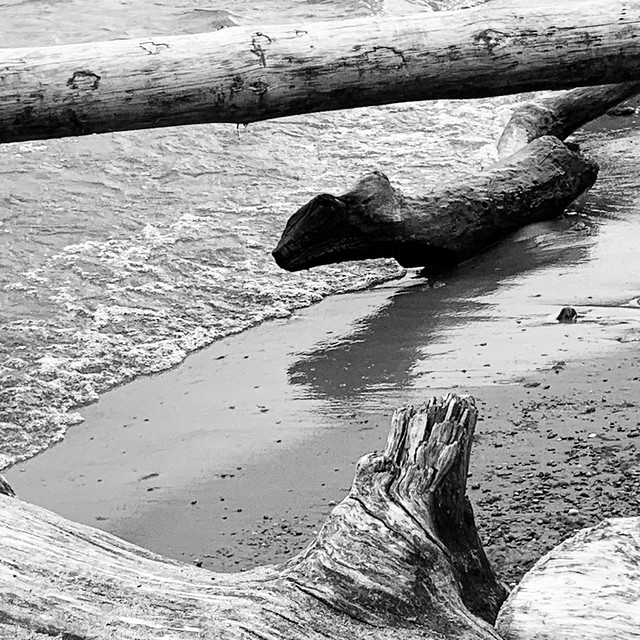 Interesting looking driftwood Monster and driftwood on the shore of Lake Ontario in Squires beach , Photograph converted to black and white , Martin's photographs , Ajax , Ontario , Canada , July 11. 2021