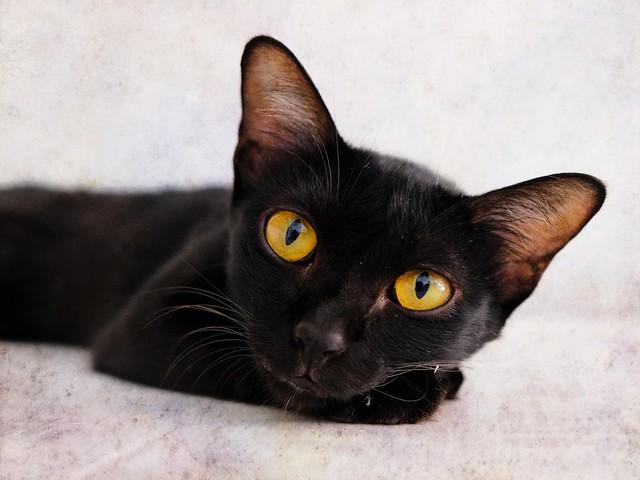 Black cat   Fuji X-E3 + 18-55