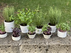 Microplante ierburi aromatice decor cheese bar revino alina Iancu vaze flori