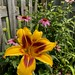 Lily & Coneflowers
