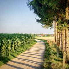 Instagram 20210723: Summer, Erding (Erding, Germany)