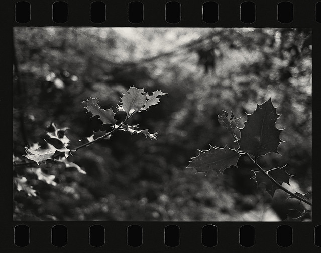 Leaves - Film Leica