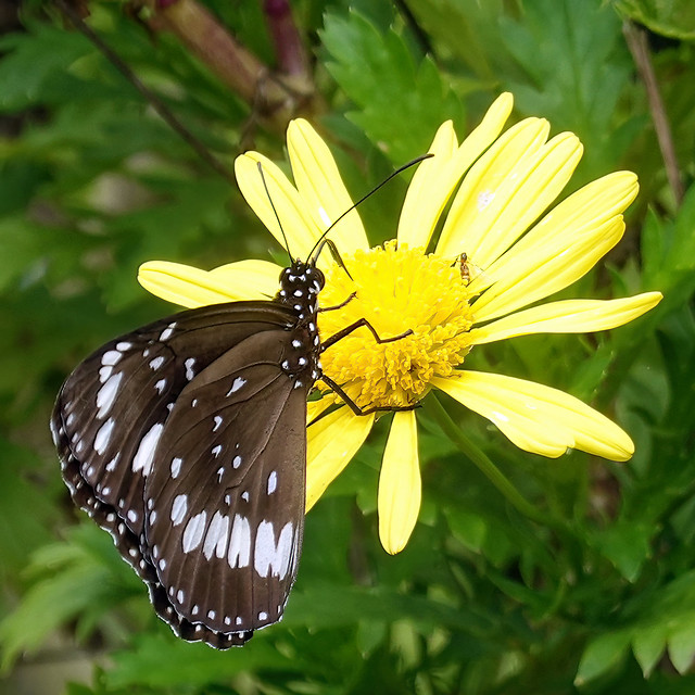 A butterfly symbolized acceptance of each new phase in life. To keep faith as everything around you changed. (Lisa Kleypas)