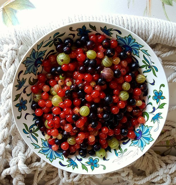 Goosegogs, blackcurrants and redcurrants from the garden