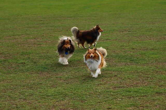 Fergus, Jordie & Charli