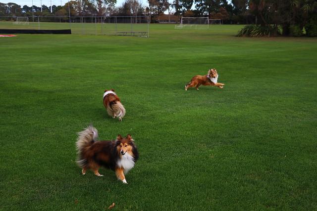 Jordie, Charli & Cricket
