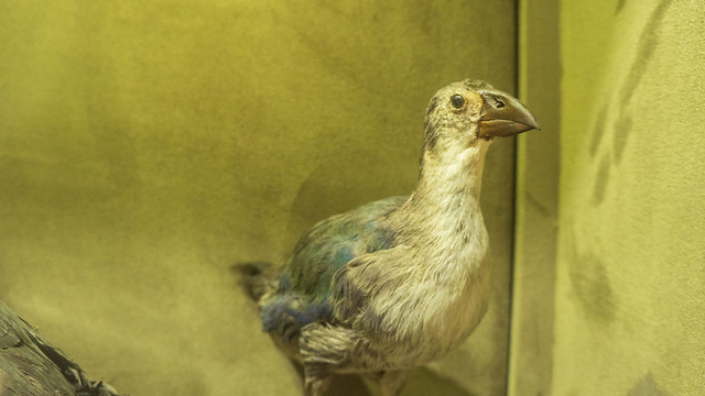 A bird taxidermy at Mohamed Ali taxidermy museum