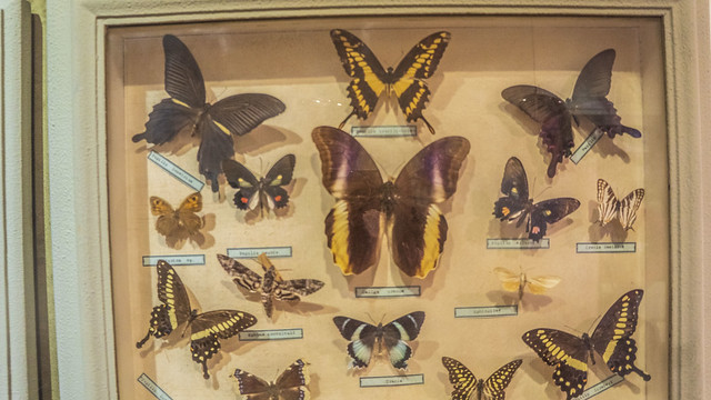 A butterflies taxidermy box at Mohamed Ali taxidermy museum
