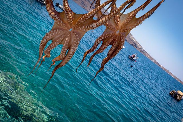 port_Ammoudi_octopuses