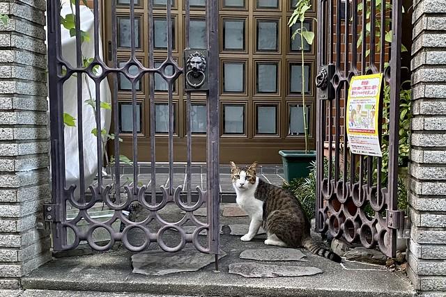 Today's Cat@2021−07−23