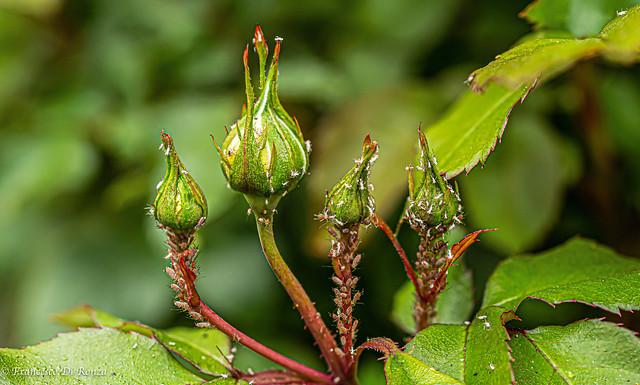 my garden Ps2.)2106/5380-8
