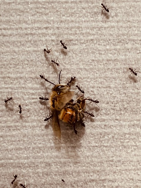 Bee ing carried away.. a funeral or a feast?