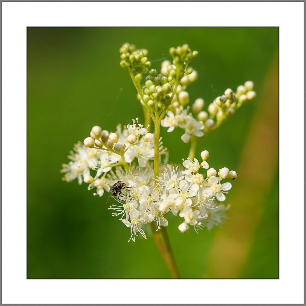 Blumen am Freitag (Flowers on Friday)