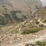 Scenic Point Trail wrapping around dead Whitebark Pine
