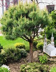 Big Tree of Life