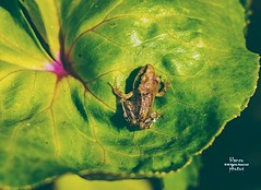 Froggie!!!