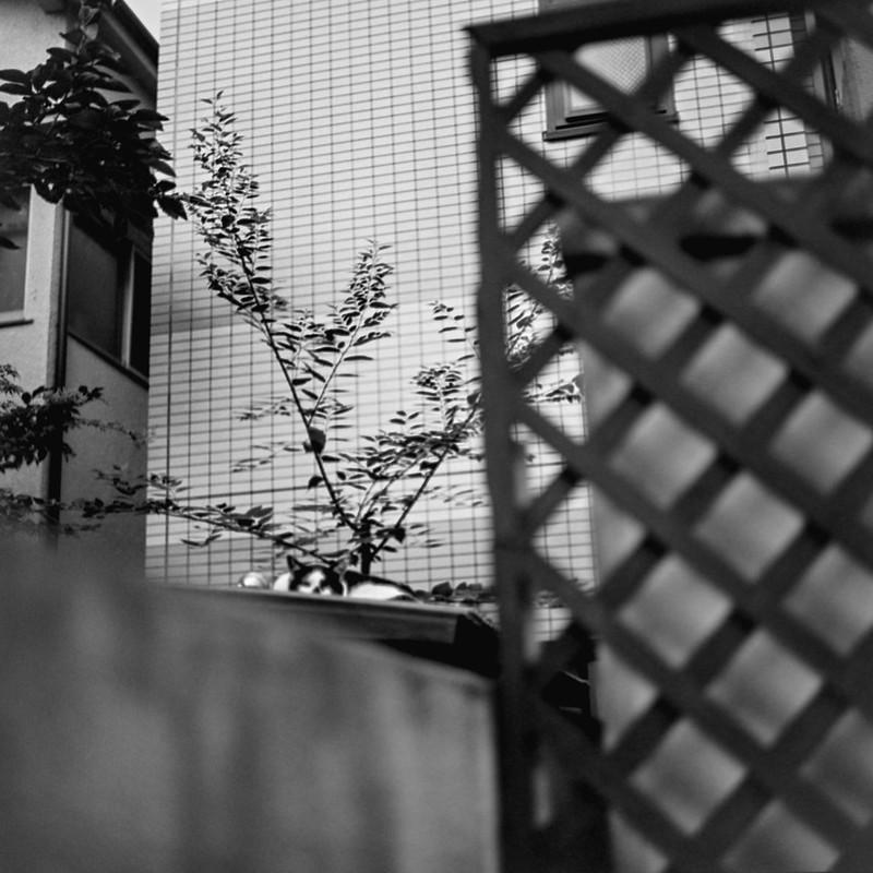 16ZENZA BRONICA S2+NIKKOR 75mm f2 8+KODAK 400TX南池袋三丁目建設現場の黒白八割れ一家 黒ブチ