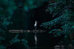 "u2618ufe0f ""A solitary heron"""
