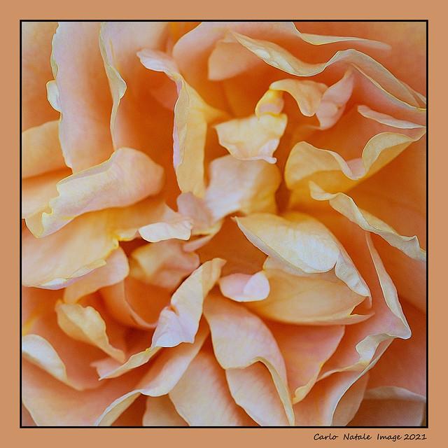 A labyrinth of petals