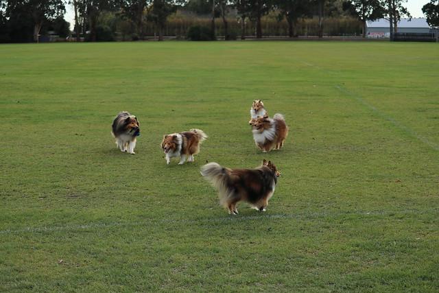 Fergus, Jordie, Bryn, Charli & Cricket