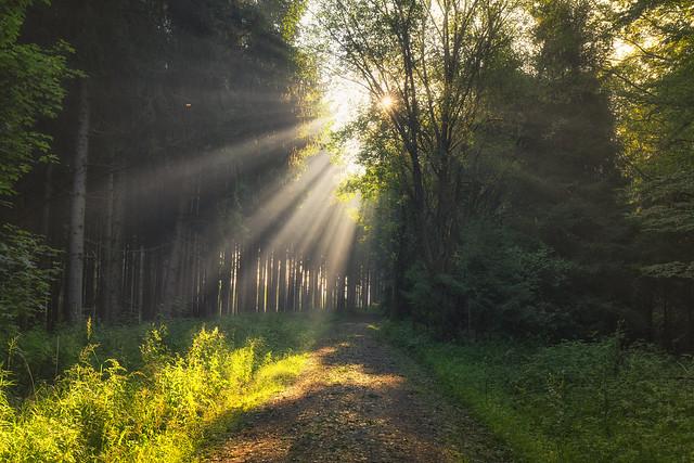 Peaceful mornings
