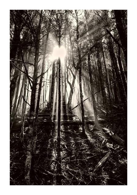 Appalachian Trail near Spence Field Shelter.
