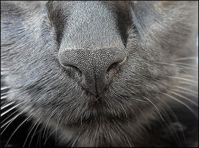 Negri, my cat !!