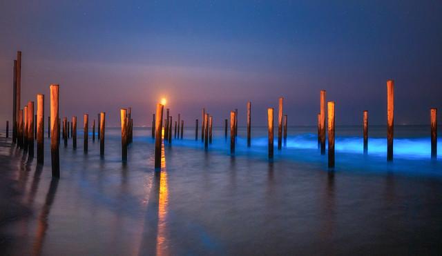 Bioluminescence | Petten