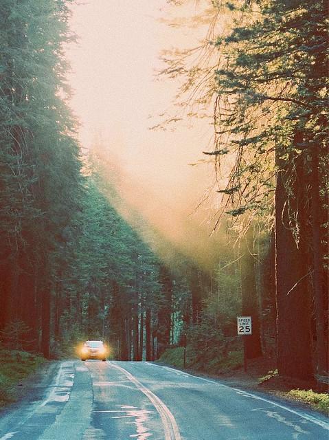 Yosemite Lights