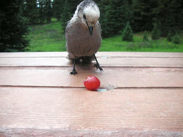 a tempting fruit......