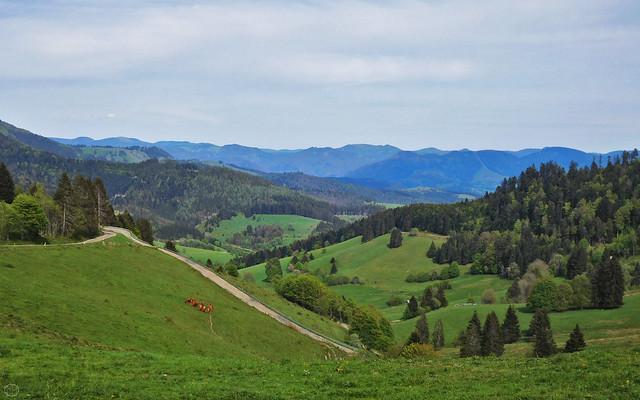 Sirnitz, Black Forest