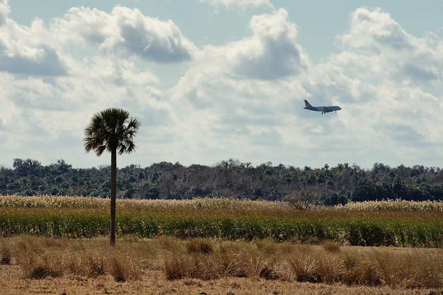 Florida Woodland:  Iron bird over the jungle.