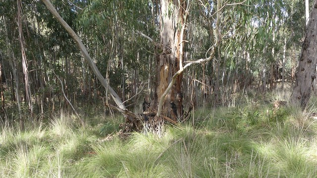 A Walk in the Brisbane Ranges.