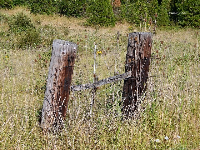 Barbed Wire Fence, Field, Trees & Two Thick Posts