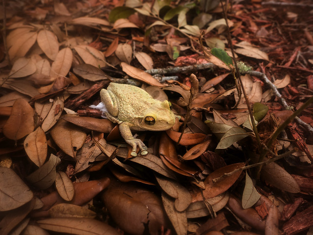 TP'd toad
