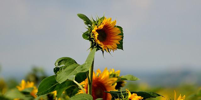 Du soleil.....