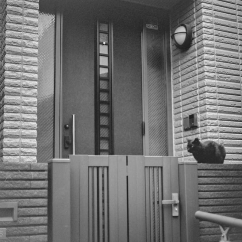 11ZENZA BRONICA S2+NIKKOR 75mm f2 8+KODAK 400TX雑司ヶ谷三丁目七曲りの路地の猫 黒