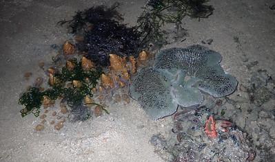 Various marine life on Pulau Sekudu