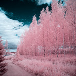 Infrared of the day 55