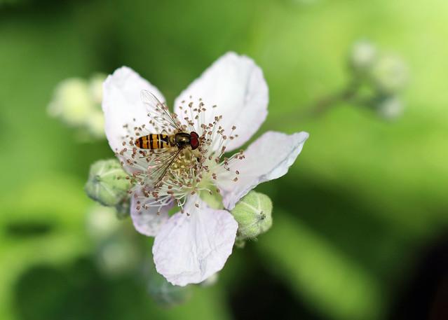 Marmalade Fly!