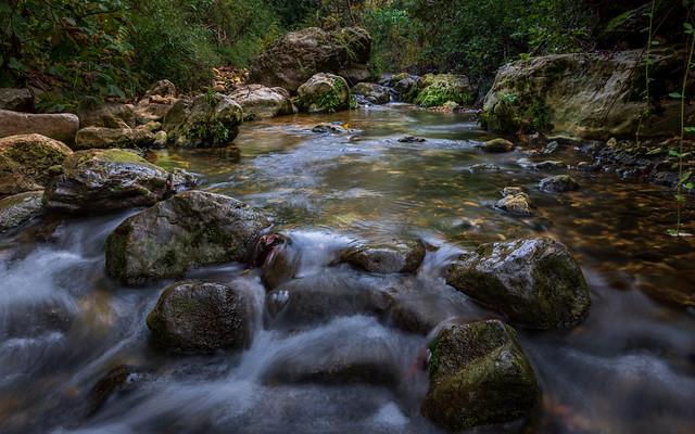 Small Stream pond