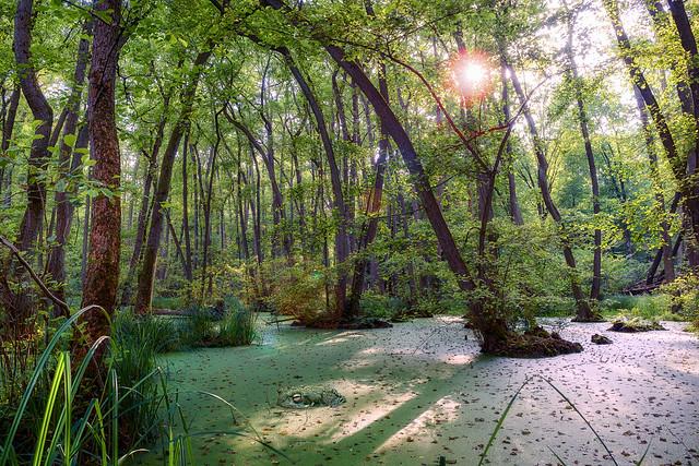 Bruchköbel mangroves monster
